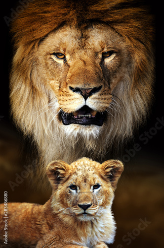 Male lion and cub portrait on savanna landscape background Wall mural