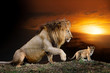 canvas print picture - Male big lion and cub on savanna landscape background and Mount Kilimanjaro at sunset