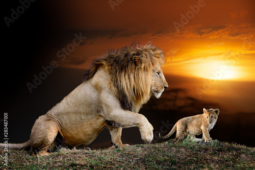 Photo  Male big lion and cub on savanna landscape background and Mount Kilimanjaro at s