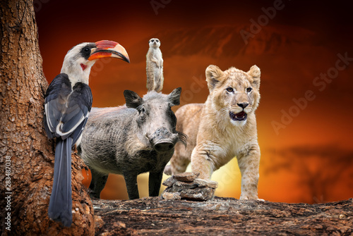 African animals on savanna landscape background and Mount Kilimanjaro at sunset Canvas Print