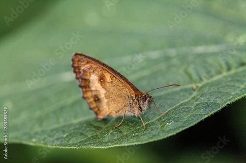 Papillon Fototapet