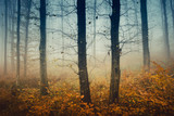 Fototapeta Fototapety z naturą - mysterious autumn woods, trees with bare branches and colorful fallen leaves in forest landscape