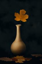 Leaf In Vase, Autumn Still Life With Black Background