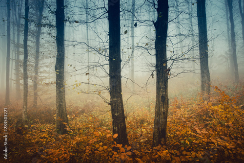 Foto auf Leinwand Logo mysterious autumn woods, trees with bare branches and colorful fallen leaves in forest landscape