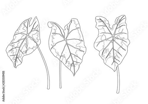Skeletal bon Leaves lined design on white background illustration vector Canvas-taulu