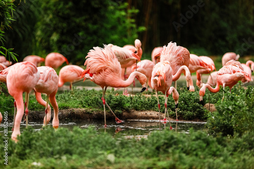 A group of pink flamingos hunting in the pond, Oasis of green in urban setting Wallpaper Mural
