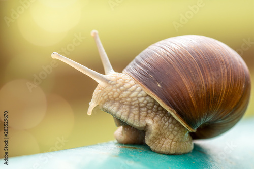 Snail on the metal pole close up view Fototapet