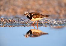 Single Birds And Small Flocks ...