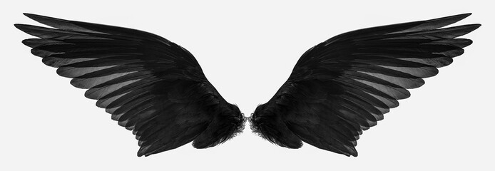 bird wings isolated on a wh...