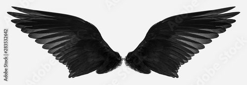 fototapeta na lodówkę bird wings isolated on a white background
