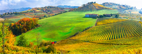 Autumn scenery, Vineyards in contryside of Piedmont, Northen wine region of Italy
