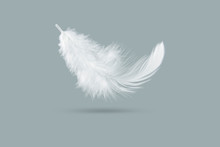 Solf White Feather Falling Dow...