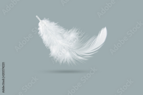 Canvas Print solf white feather falling down in the air