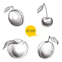 Hand Drawn Sketch Style Summer Fruits Set. Plum, Apricot, Cherry And Peach. Healthy Organic Food. Farm Market Products. Best For Package Design. Vector Illustration.