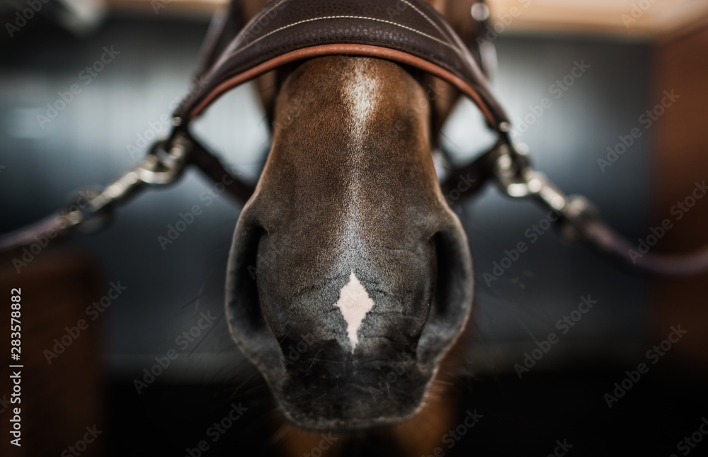 Horse Nose and Bridle
