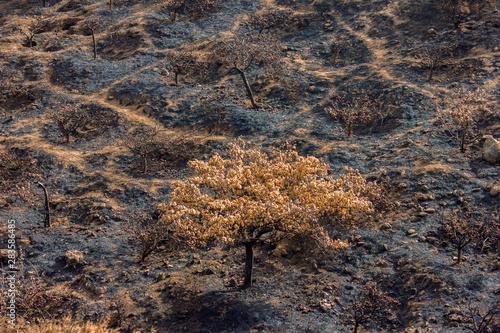Photo  El paso del fuego solo cenizas deja.