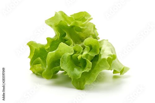 Fototapeta Lettuce Salad leaf, isolated on white background obraz