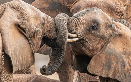 Photo Playing little elephants