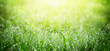 canvas print picture - Green grass on meadow field with dew droplets in morning light
