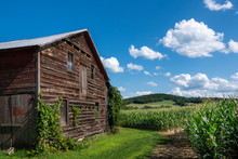 Old Barn With A View To A Hudson Valley Cornfield