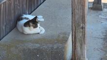 男木島の猫3