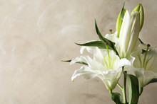 Beautiful Lilies On Light Brow...