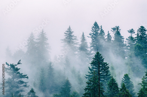 Foto auf AluDibond Landschaft Misty mountain landscape