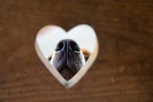 Conceptual Portrait. A Dog Nos...