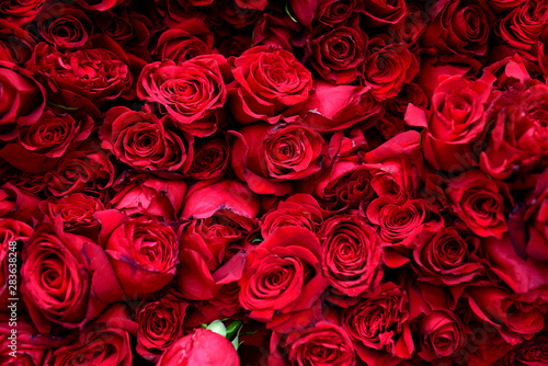 Red roses in flower market, Andes Mountains, South America. Canvas Print