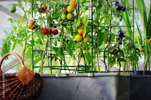 Fotografia Container vegetables gardening