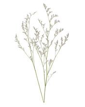 Caspia Flowers On White Backgr...