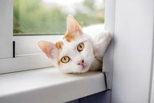 White Cat Lying On The Windows...