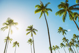 Hawaii tall palm trees with sun flare against blue sky summer travel background USA vacation destination.