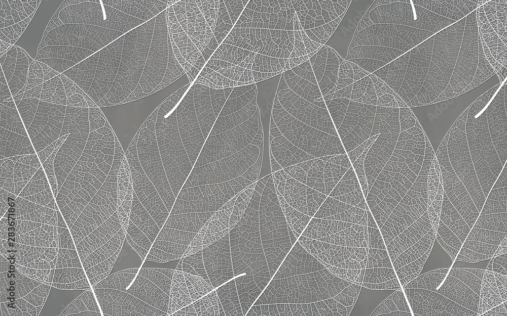 Fototapety, obrazy: Gray background with white leaf texture