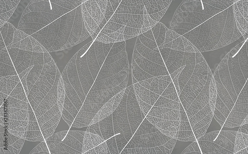 Gray background with white leaf texture - 283671867