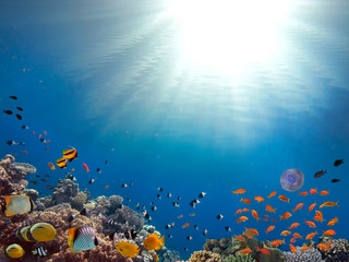 Fototapeta na wymiar Coral Reef and Tropical Fish in Sunlight