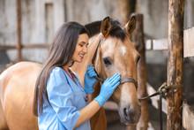 Veterinarian Examining Horse On Farm