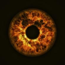 Golden Eye Iris