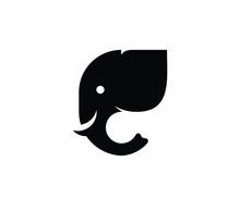 Elephant Black Head