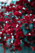 Red Flowers On Green Background