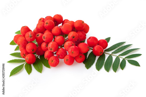 Photo Red rowan berries and leaves, isolated on white background