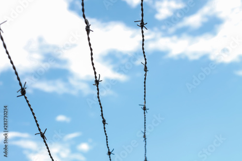 Barbed wires with the blue sky in the back Wallpaper Mural