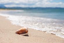 砂浜と貝殻