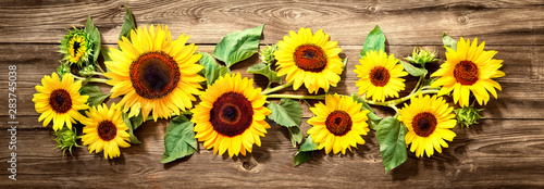 Poster de jardin Tournesol Sunflowers on wooden board
