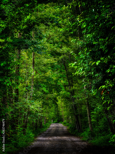 Green Palate of Lush Trees over the road untraveled