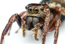 Extreme Close Up Of A Female W...