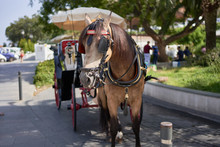 Andalusian Carriage With Horse