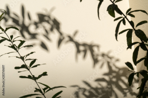 Photo Shadow of leaves branches in wind show on the white wall background
