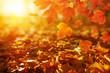 Leinwanddruck Bild - Autumn leaves on the sun.