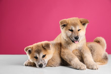 Adorable Akita Inu Puppies On Pink Background